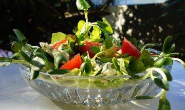 Broto de girassol - salada
